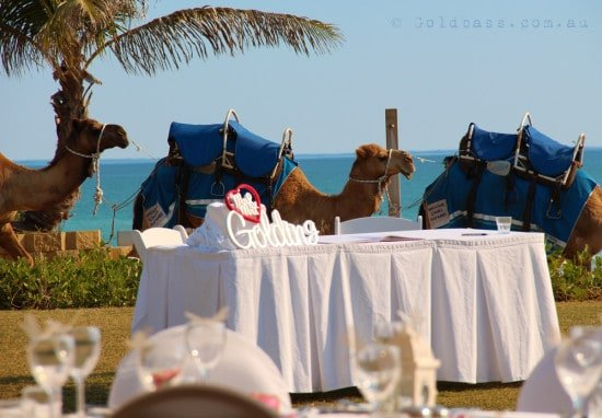 Camels walking past the Cable Beach Amphitheatre