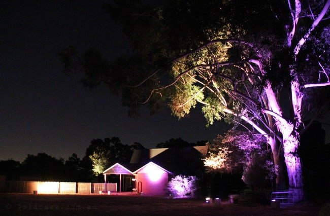Uplights shining up some gum trees and house