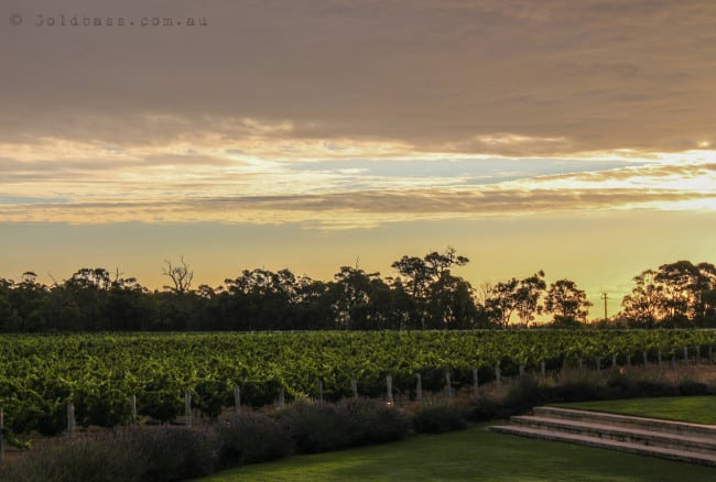 Watershed Wines Grapevine Sunset